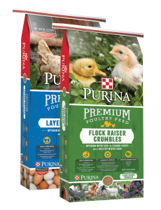 Purina Poultry Promotion | Argyle Feed Store