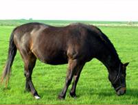 HorseFeature.jpg