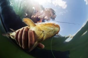 Fish Trucl Deliveries