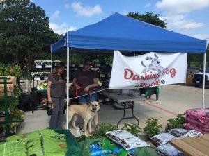 Dashing Dog Rescue Pet Adoption