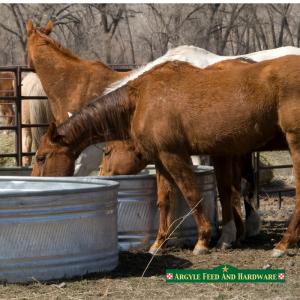 Winterizing Horses