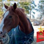 Argyle Feed_12 Days of Xmas Horse Blankets #7