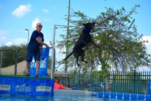 Splash Dogs Dock Jumping Event | Argyle Feed Store