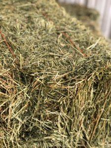 Alfalfa Hay | Argyle Feed Store