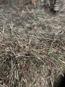 Timothy Orchard Hay | Argyle Feed Store