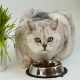 Grey cat eating cat food from a silver bowl