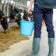 Person Holding Feed Pail for Farm Supplies While Cows Feed
