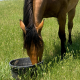 Brown Horse in Green Grass Eating Textured Horse Feed