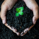 Black Soil with Plant in Hands