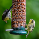 Two Yellow and Grey Birds Eating Wild Bird Feed