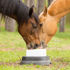 Bay and Palomino Horses with Salt/Mineral Block for Horse Supplements & Treats Category