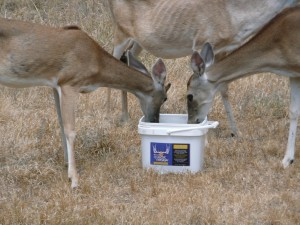 Wildlife Deer Eating QD Mineral 2A