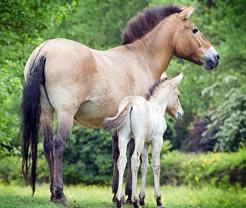 HorseFeature