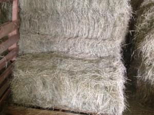 2 string coastal hay