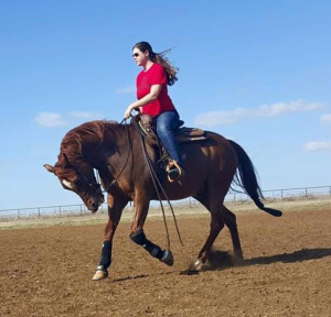 Managing Your Horse During Hot Weather