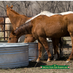 Winterizing Horses