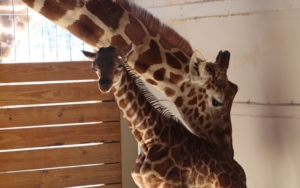 April and Baby Get Mazuri Exotic Animal Feeds
