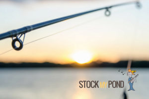 Stock Your Pond | Argyle Feed Store