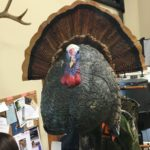Turkey Decoys