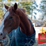Argyle Feed_12 Days of Xmas Horse Blankets #7