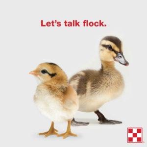 Chick Workshop