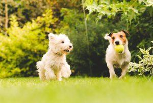 Summer Dog Care Tips