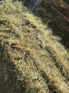 Local Premium Coastal Hay | Argyle Feed Store