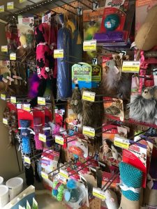 cat supplies available at Argyle