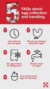 tips for collecting eggs from purina